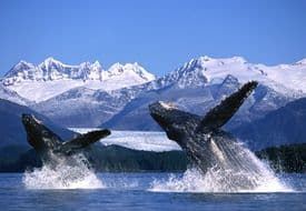 Whale & Dolphin Images For Canvas - Breaching Together