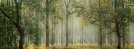Woodland Forest Canvas Framed Wall Art  - Painted Forest