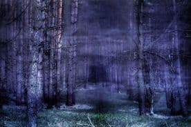 Woodland Forest Canvas Framed Wall Art - Purple Forest