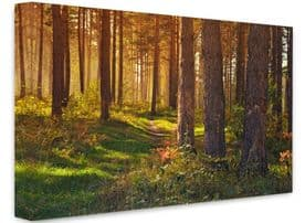 Woodland  Forestscapes Canvas Framed Wall Art -