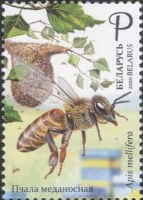 Belarus 2020  Honey Bees/ Insects/ Nature/ Conservation/ Environment  1v  (n46407)