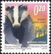 Bosnia 2009  Badger/ Animals/ Wildlife/ Nature/ Conservation/ Badgers 1v (bhs1029)