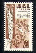 Brazil 1960 Agriculture  / Wheat/ Cocoa/ Cotton/ Food  /  Crops  /  Farming 1v (n30454)