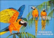 Congo 2000  Parrots/ Macaws/ Birds/ Wildlife/ Conservation 1v m/s (b1113)