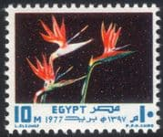 Egypt 1977 Bird of Paradise Flowers/ Plants/ Nature/ Festivals/ Strelitzia 1v (n44543)