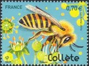 France 2016 Solitary Bees/ Insects/ Collared Bee/ Nature/ Conservation/ Flowers 1v (n45647)