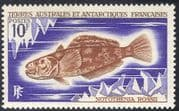FSAT/TAAF 1971 Marbled Rockcod/ Fish/ Nature/ Marine/ Wildlife/ Environment/ Conservation 1v (n23390)