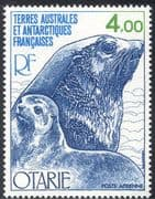 FSAT/TAAF 1979 Kerguelen Fur Seals/ Nature/ Animals/ Wildlife/ Marine 1v (n23258)