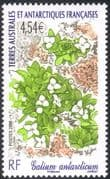 "FSAT/TAAF 2008 ""Galium antarcticum""/ Flowers/ Plants/ Nature/ Animated 1v (n30225)"