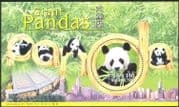 Hong Kong-China 1999 Giant Pandas/ Wildlife/ Nature/ Animals/ Conservation/ Environment 1v m/s (b4370)