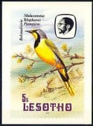 Lesotho 1982 Birds  /  Bokmakierie  /  Tree  /  Nature Postcard a91