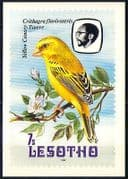 Lesotho 1982 Birds  /  Canary  /  Blossom  /  Nature Postcard (a88)