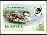 Lesotho 1982 Birds  /  Teal  /  Duck  /  Nature Postcard (a89)