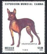 Mexico 1984 Dog Show  /  Dogs  /  Animals  /  Pets 1v (n25291)