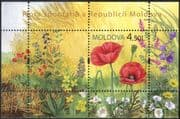 Moldova 2009 Wild Flowers/ Poppy/ Poppies/ Plants/ Nature 1v m/s (n44449)