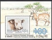 Namibia 1993 Cattle  /  Farming  /  Cows  /  Animals  /  Nature f  /  s ref:s5656