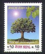 Nepal 2001 Pipal Tree  /  Trees  /  Plants  /  Nature  /  Fig  /  Food 1v (n37199)