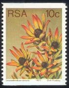 South Africa (RSA) 1977 10c Coil/ Sun Conebush/ Flowers/ Succulents/ Cacti/ Nature 1v (n21740)