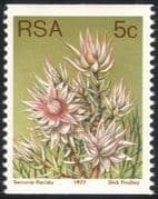 South Africa (RSA) 1977 5c Coil/ Blushing Bride/ Flowers/ Succulents/ Cacti/ Nature 1v (n21742)