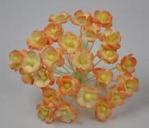 1.3cm APRICOT CREAM DOUBLE-LAYERED Daisy Mulberry Paper Flowers