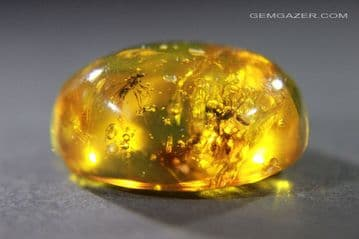 Amber cabochon with 5 winged ants, Dominican Republic.  15.35 carats / 3.07 grams