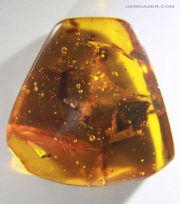 Amber cabochon with fauna and flora inclusions, Dominican Republic.  18.84 carats.