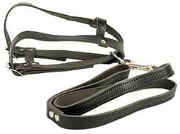 Leather Halter with Lead